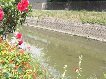 小野川.jpgのサムネール画像